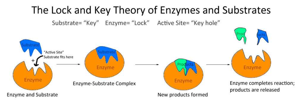 Write my lock key hypothesis