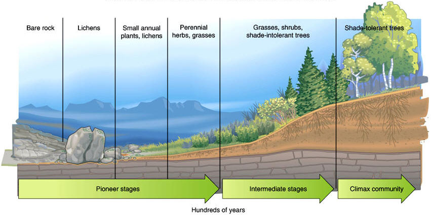 biodiversity one small step for man A reduction in the rate of loss of biodiversity is a necessary first step progress in this regard can be achieved by 2010 for some components, but it is unlikely .