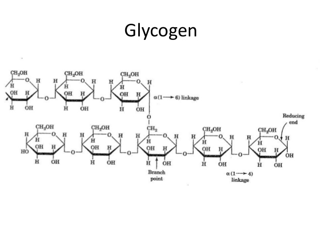 Building Blocks Of Glycogen